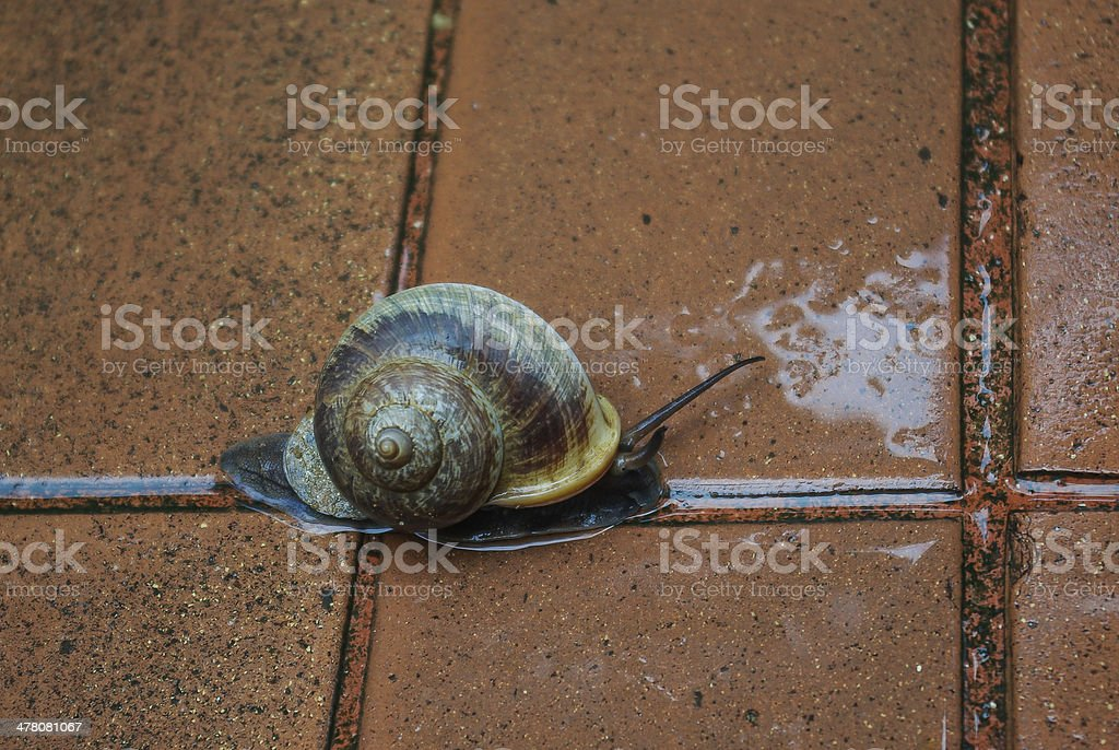 snail runing royalty-free stock photo