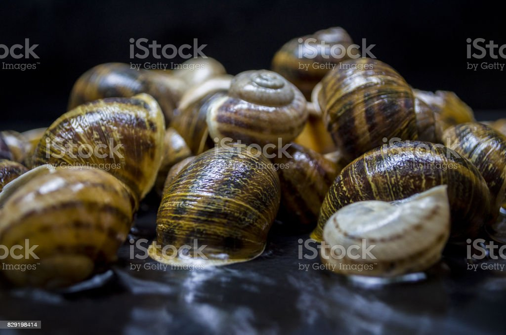 Snail Shell Background stock photo