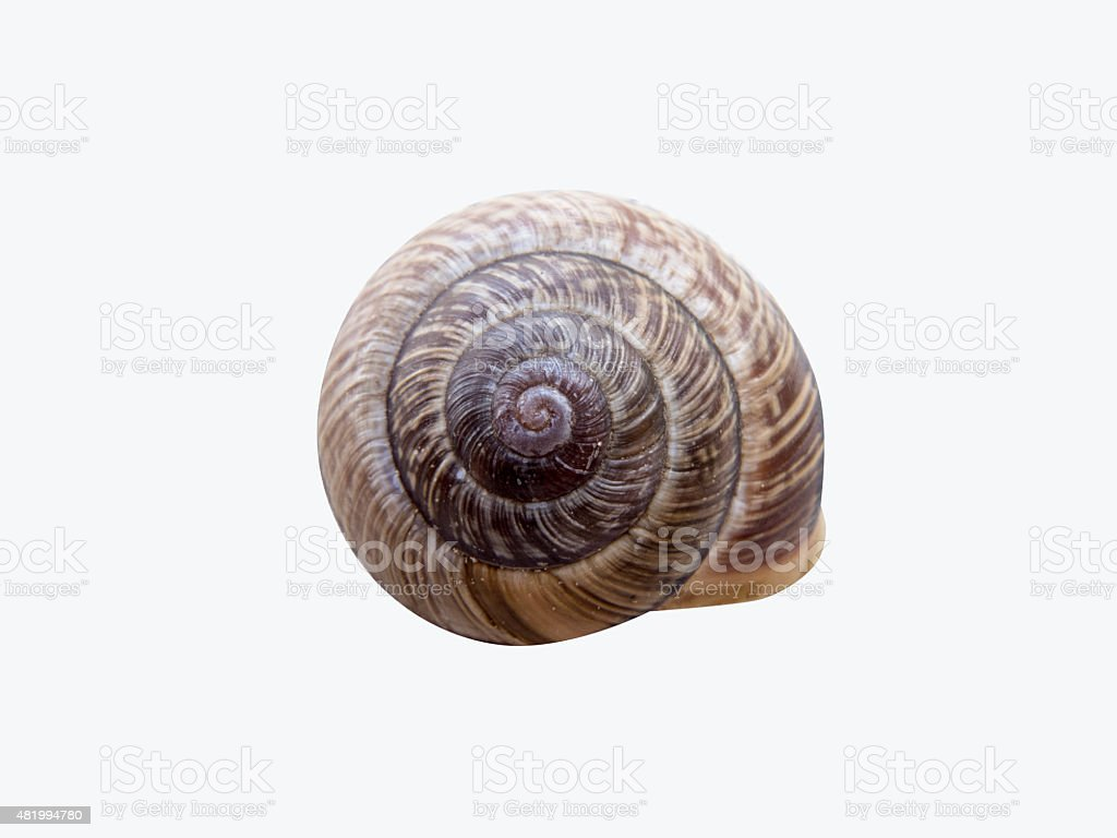 Snail shell isolated on white background stock photo