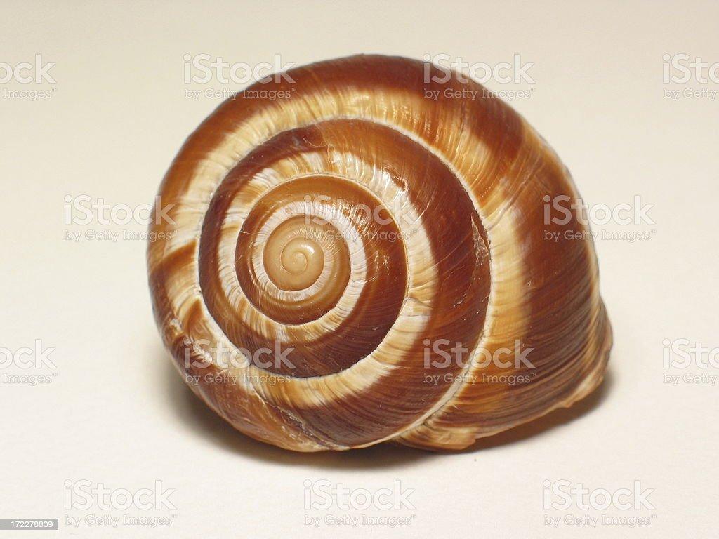 Snail shell royalty-free stock photo