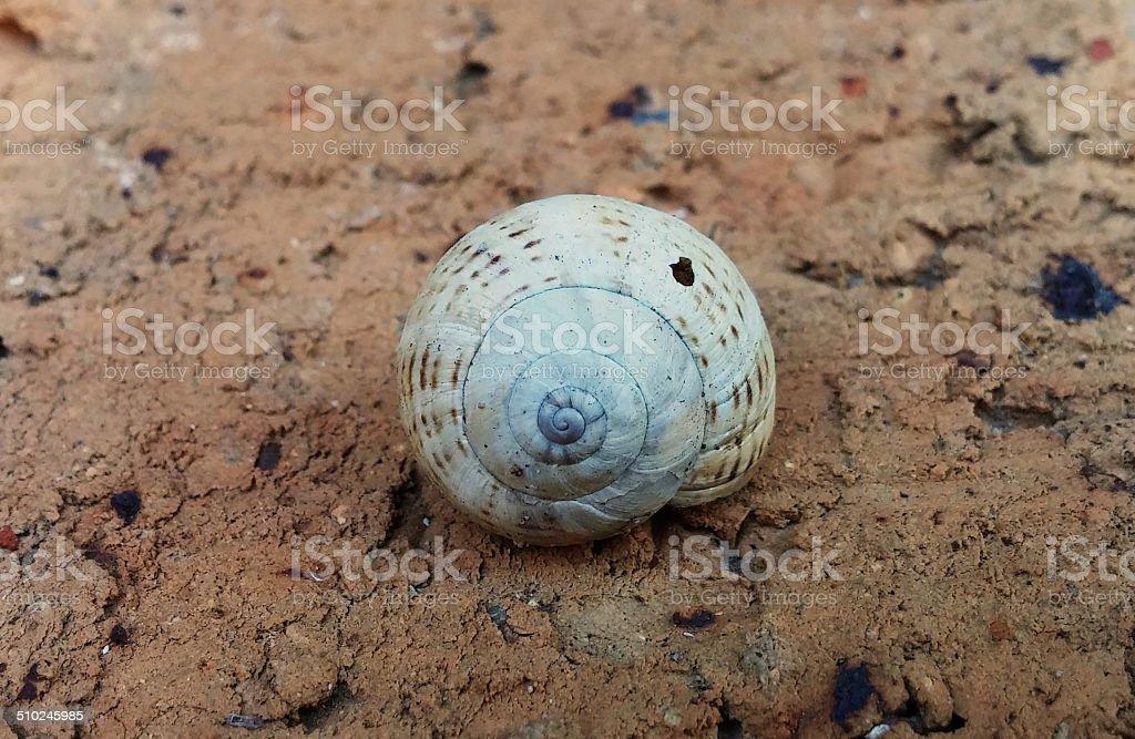 Snail Shell stock photo