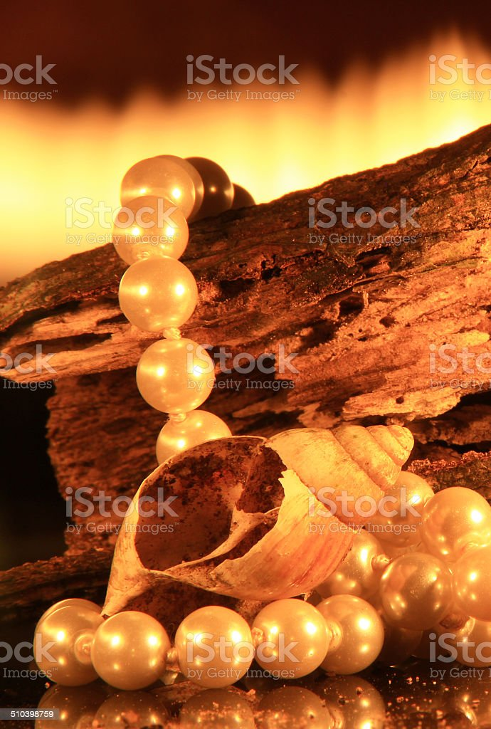 Escargot Shell photo libre de droits