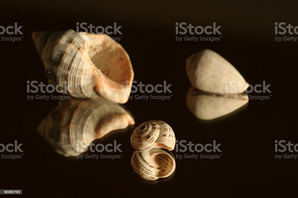 snail shells on a mirror royalty-free stock photo