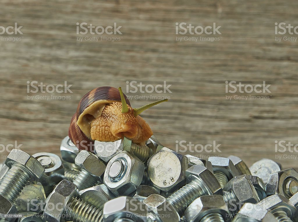 snail sitting on the nuts and bolts royalty-free stock photo