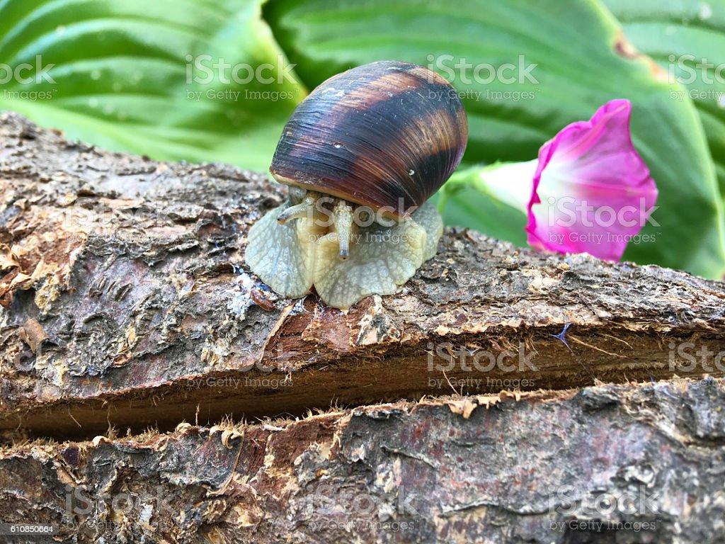 Snail sitting on tree branch stock photo