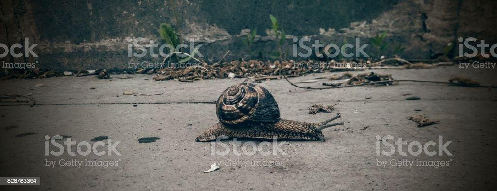 snail track stock photo