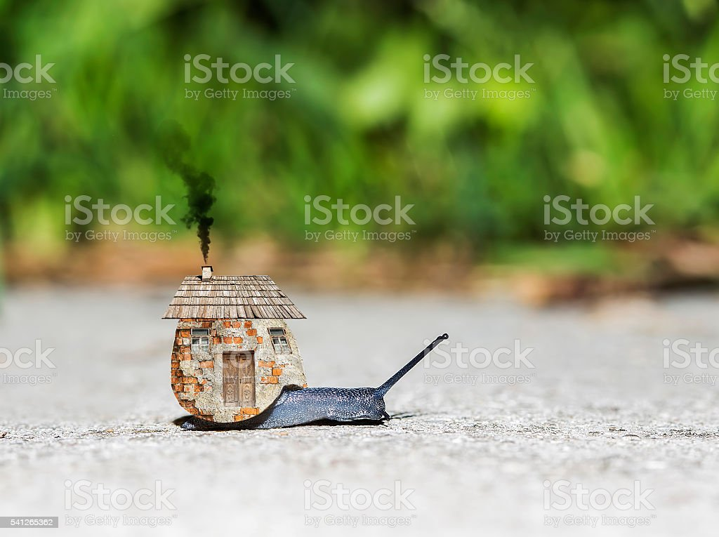 Snail with a house stock photo