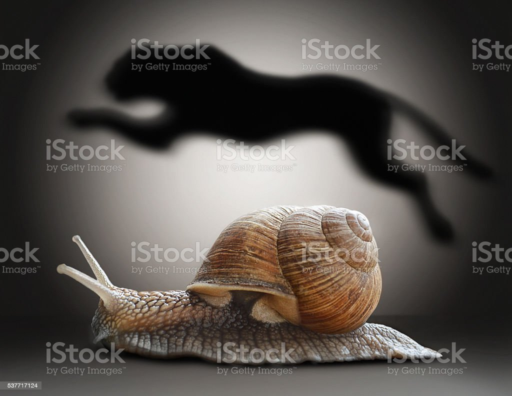 Snail with cheetah shadow. Concept graphic in soft vintage style stock photo