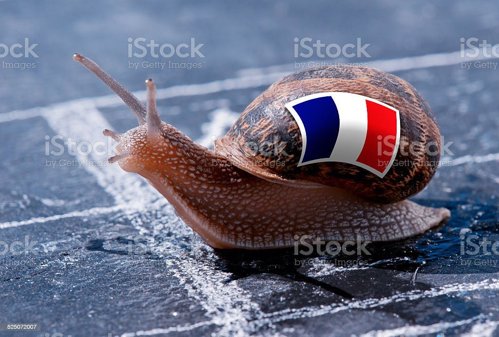 snail with the colors of France flag stock photo