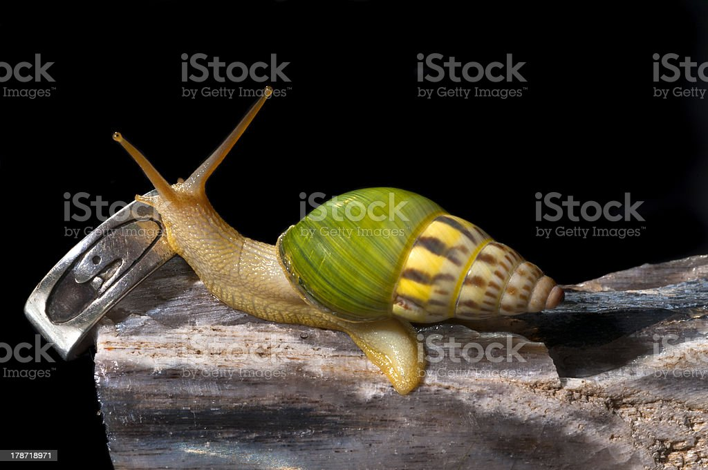 Snail with the Rings royalty-free stock photo
