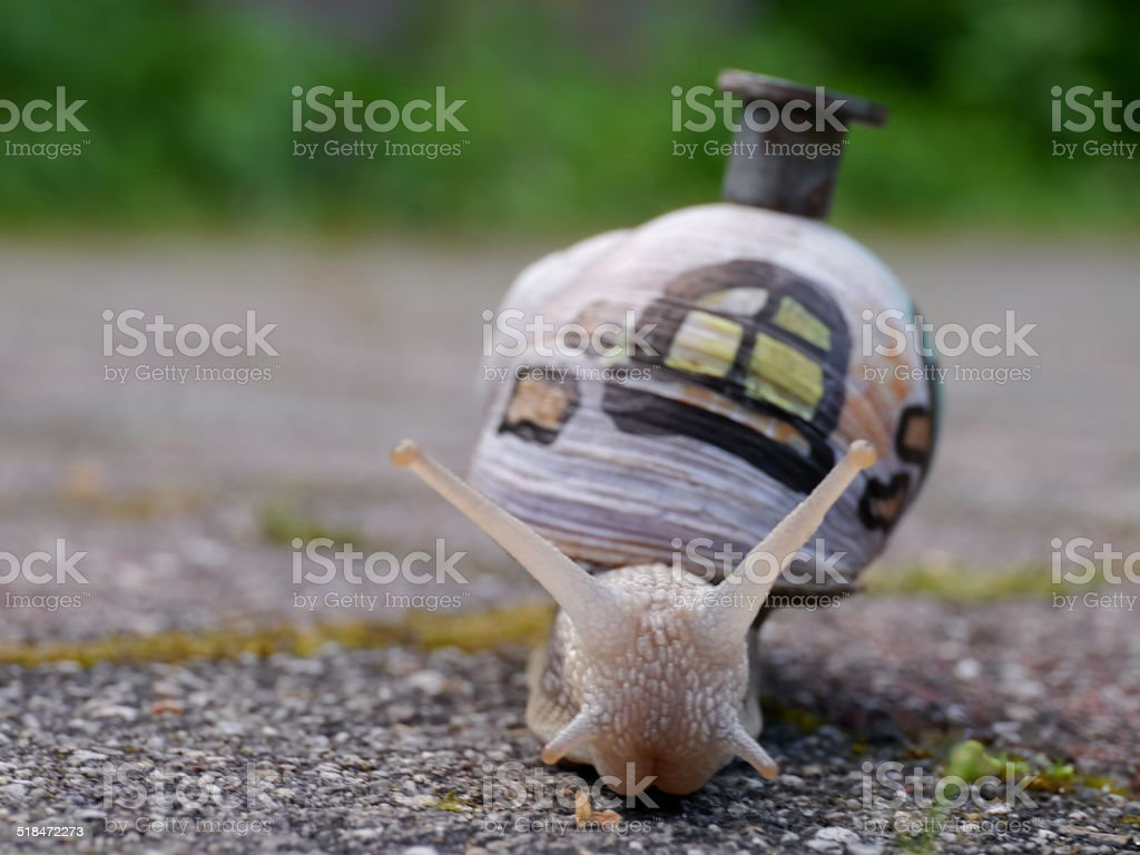 Snail with window and chimney royalty-free stock photo