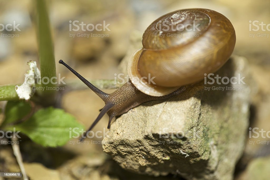 Snail World stock photo