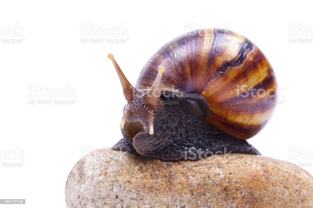 Snails and stones isolated on white background royalty-free stock photo