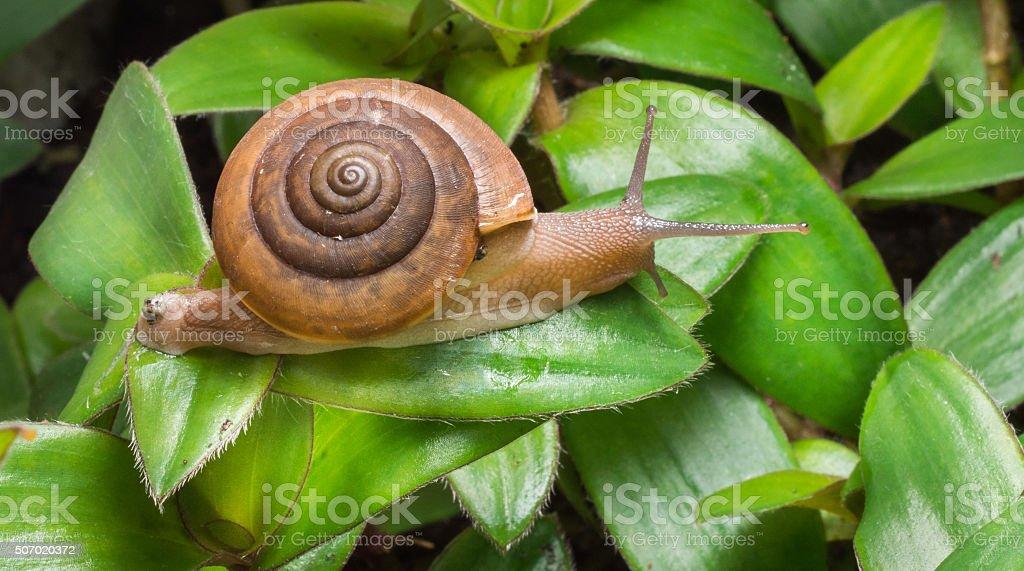 Snails crawling stock photo