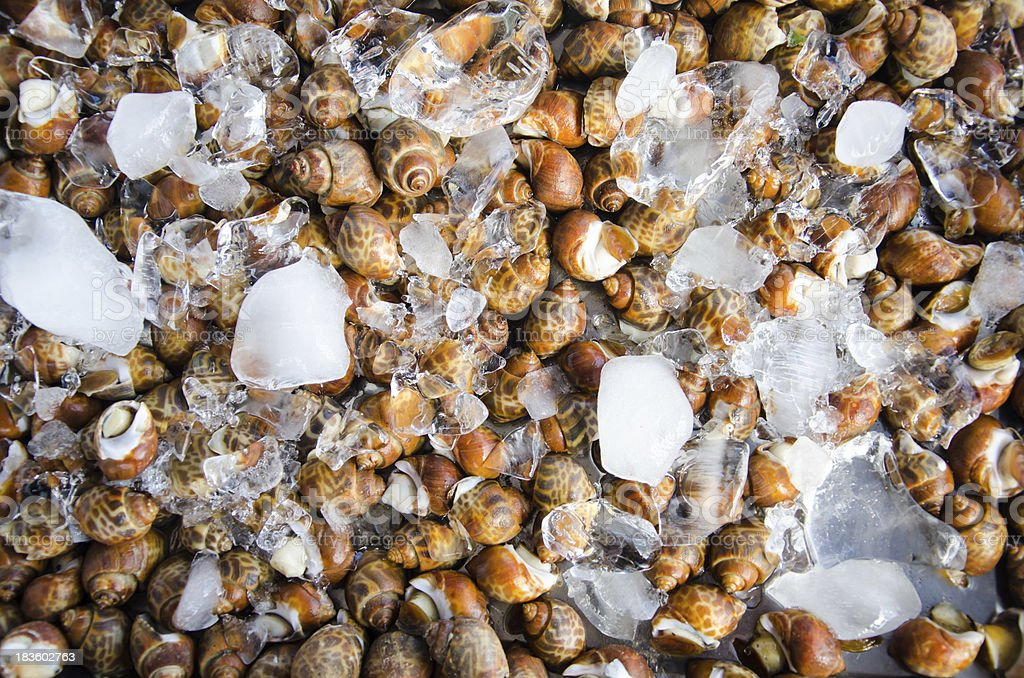 Snails for sell and ice royalty-free stock photo
