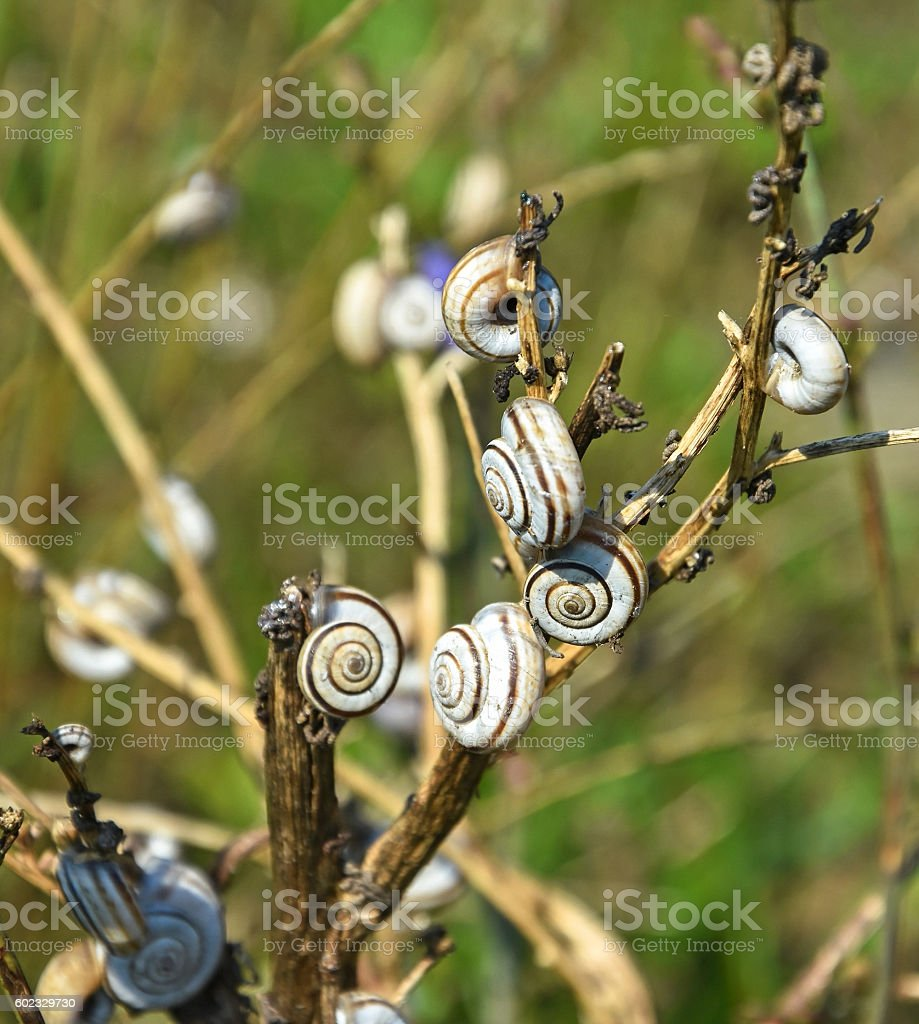 Snails in summer stock photo