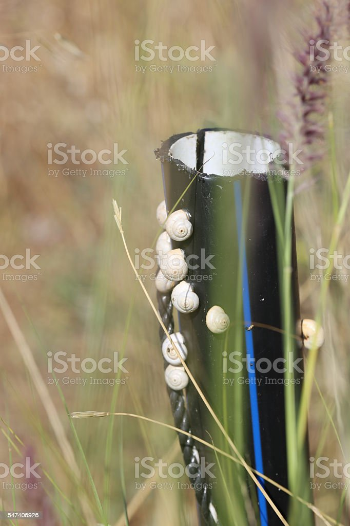 Snails on a Black Pipe stock photo