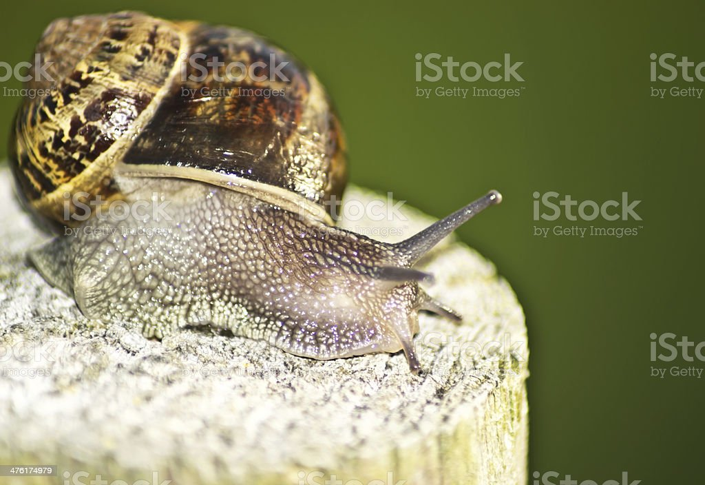 snails on the beam tree a green background royalty-free stock photo