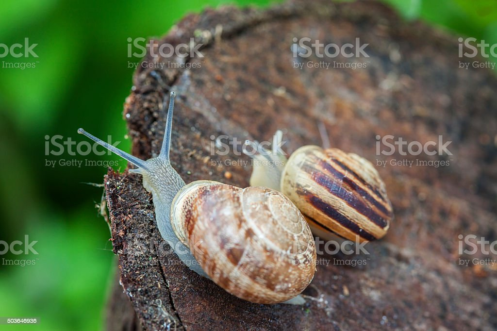 Snails on wood, close up stock photo