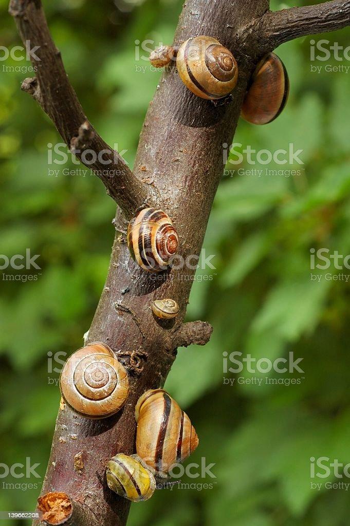 Snails royalty-free stock photo