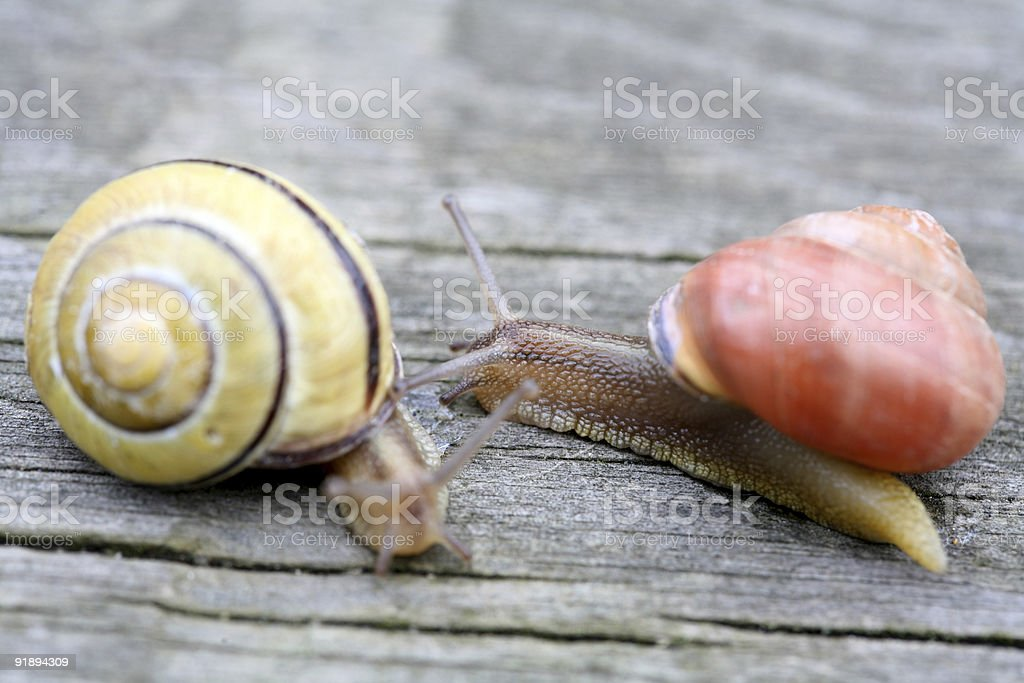 snails royalty-free stock photo