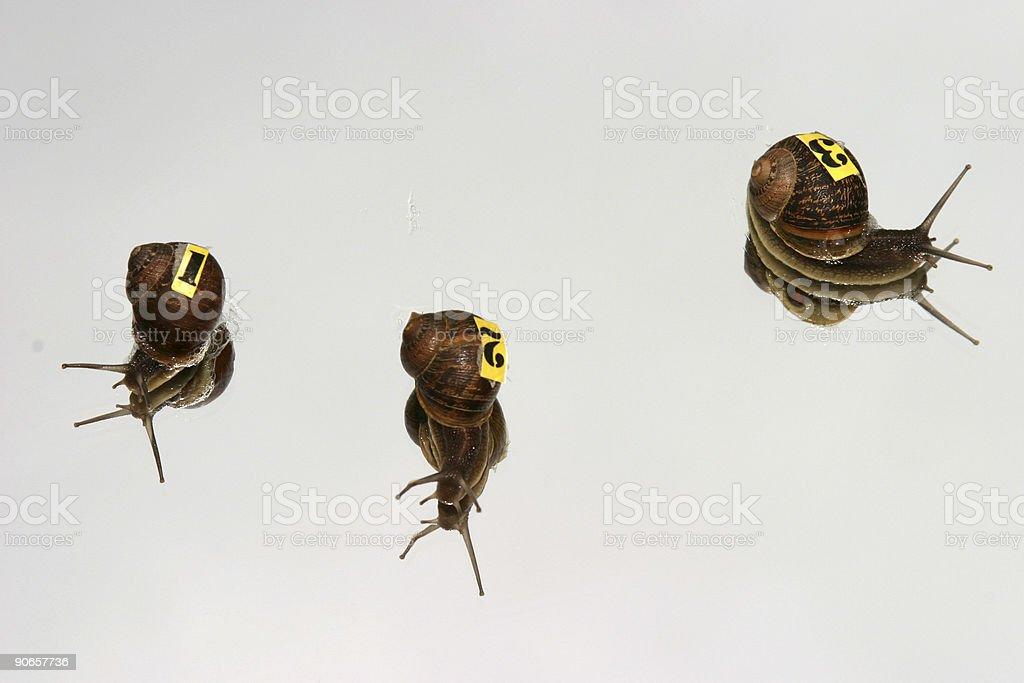 Snails #'s 1,2, &3 stock photo