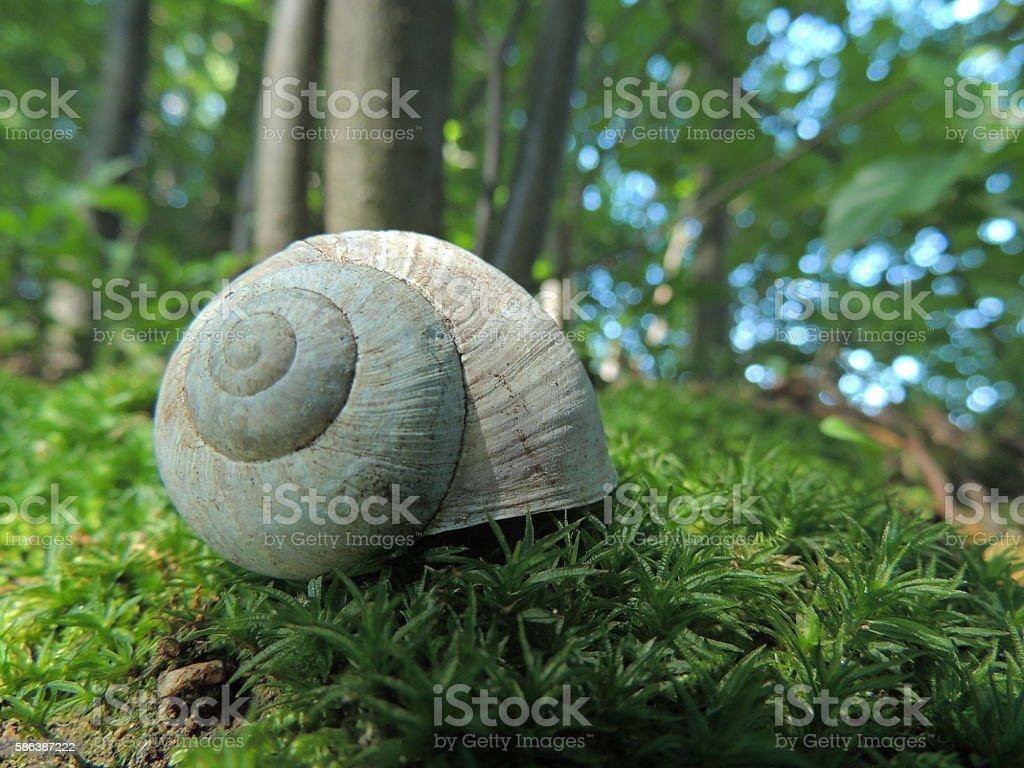 Snail's Shell stock photo