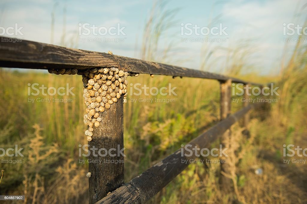 Snails under the fence stock photo