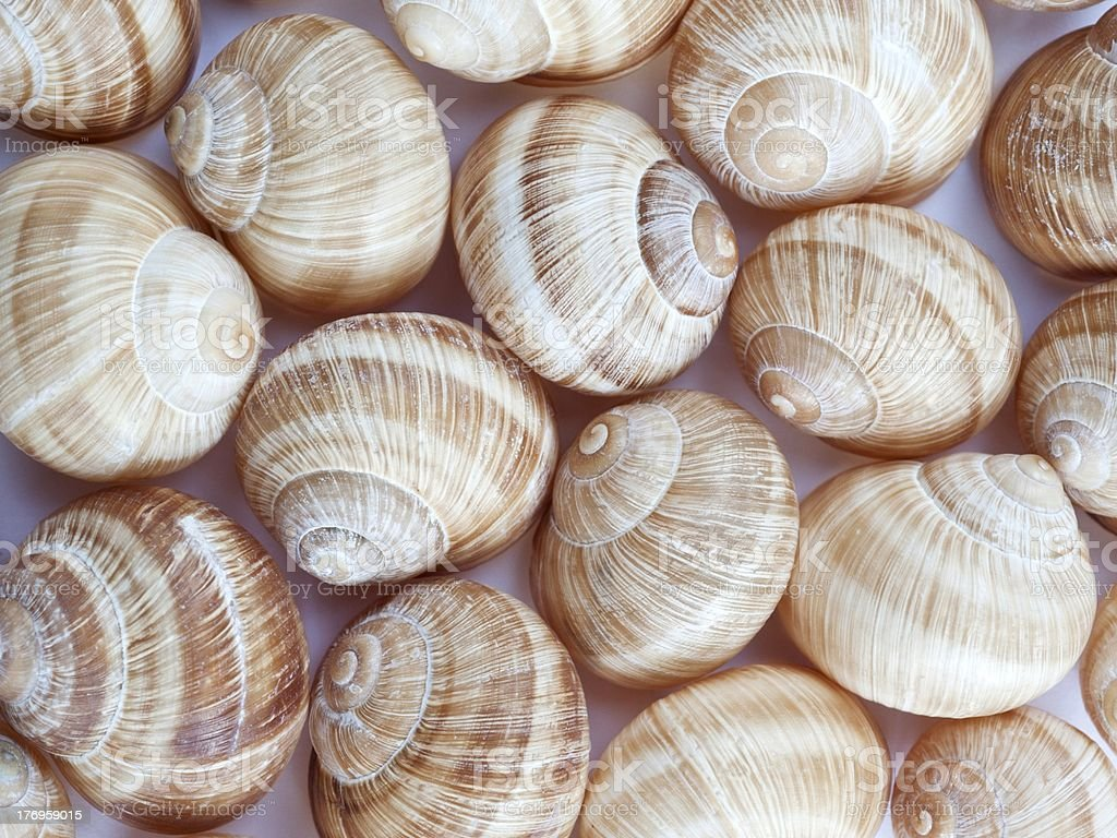 Snailshell-Group royalty-free stock photo