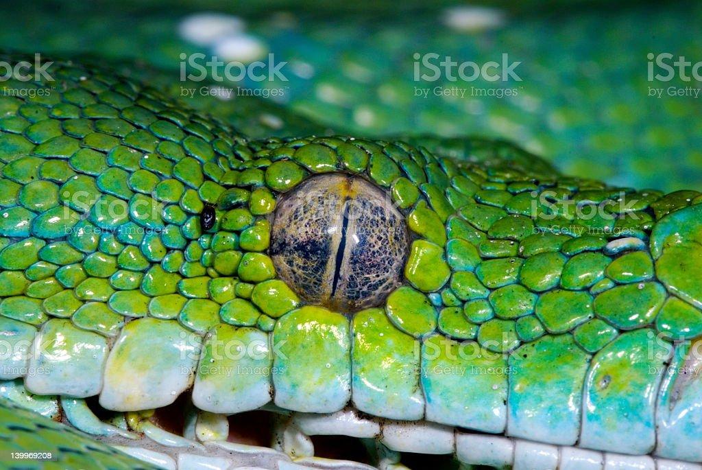 snake 12 stock photo