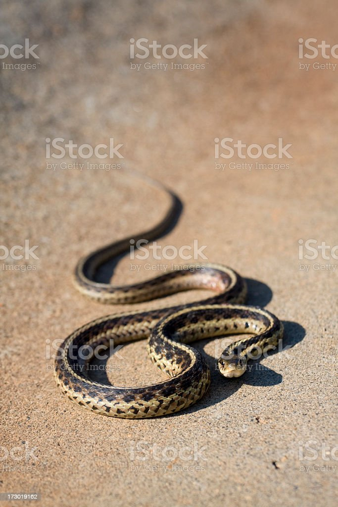 Snake all coiled up stock photo