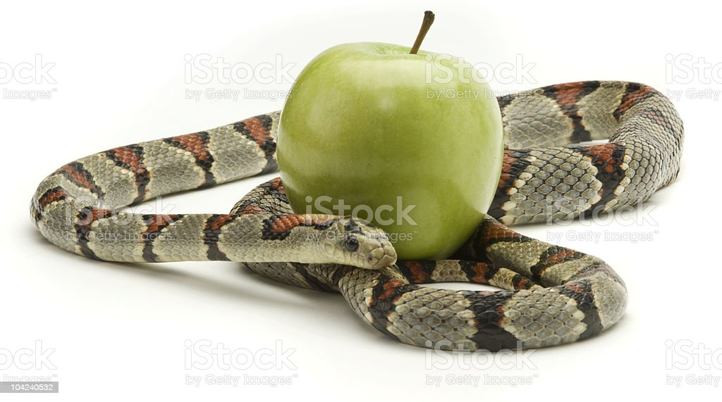 Snake and Apple stock photo