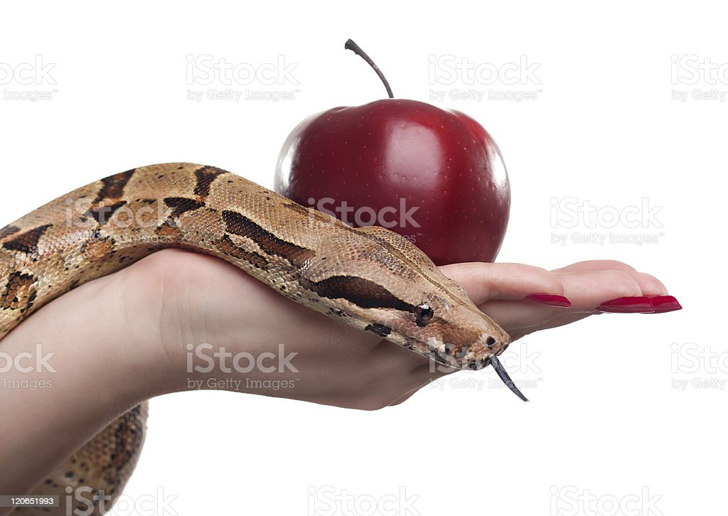 Snake and apple royalty-free stock photo