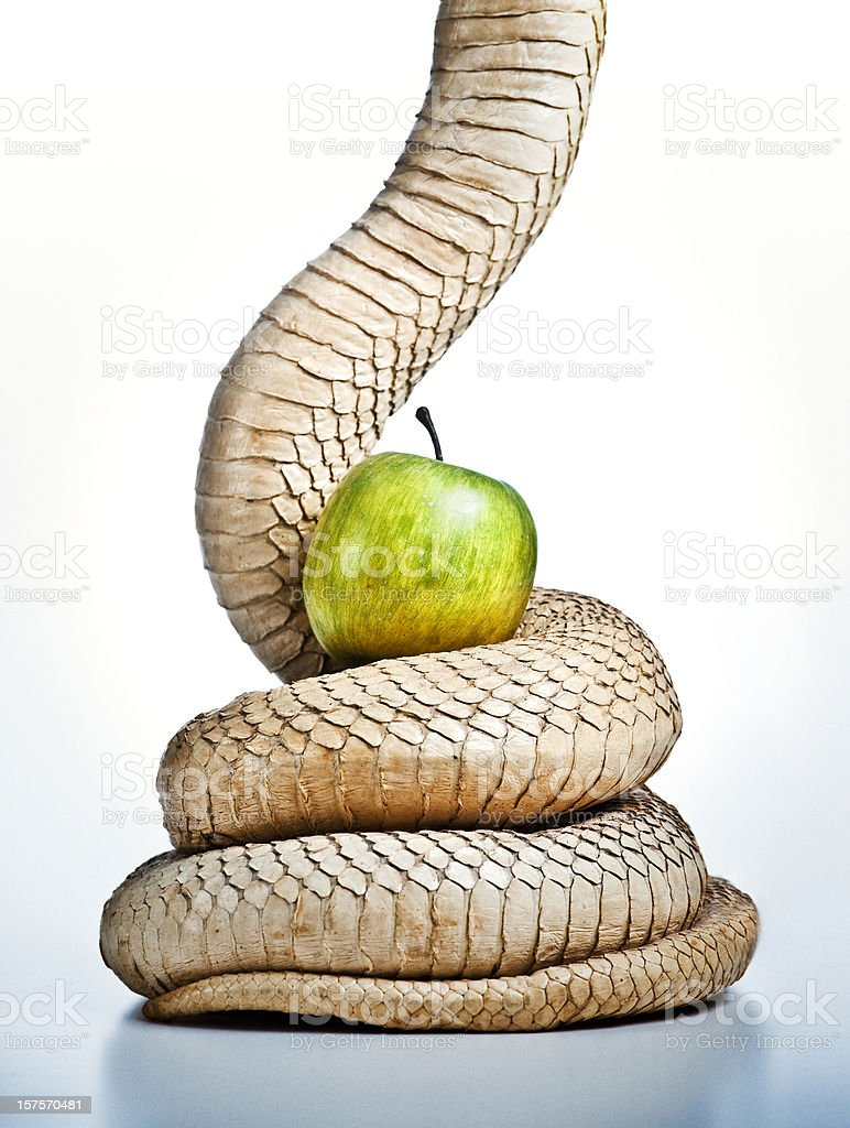 snake and apple, the original sin stock photo