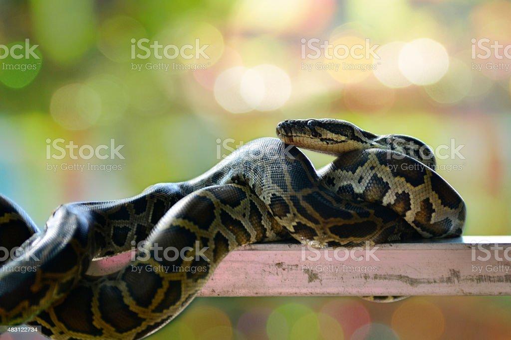 Snake background bokeh stock photo