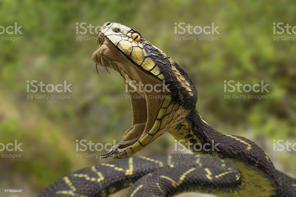 Snake Biting royalty-free stock photo