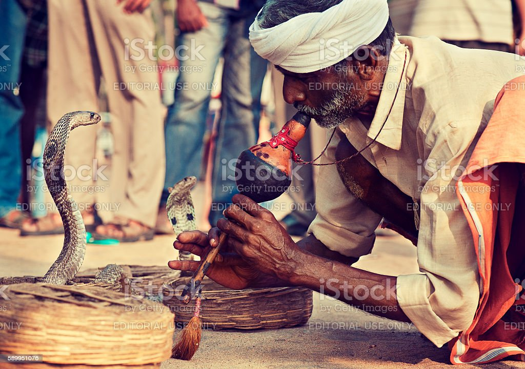Snake charmer and his cobras. stock photo