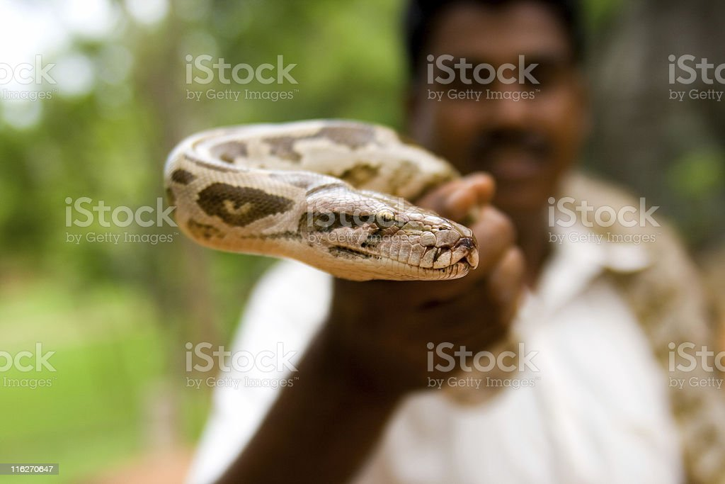 Snake charmer holding in hand a python royalty-free stock photo