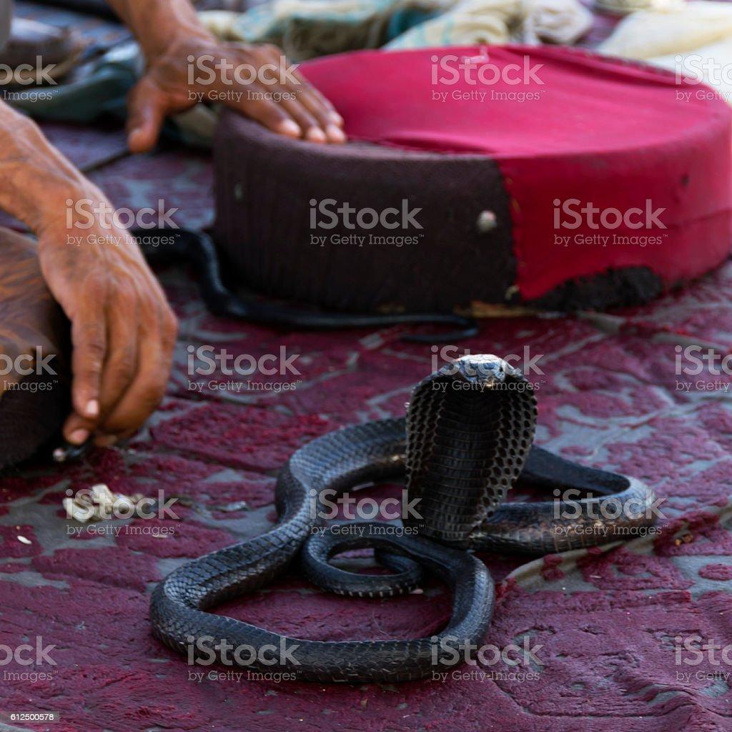 Snake charmer on Djemaa el-Fna square stock photo