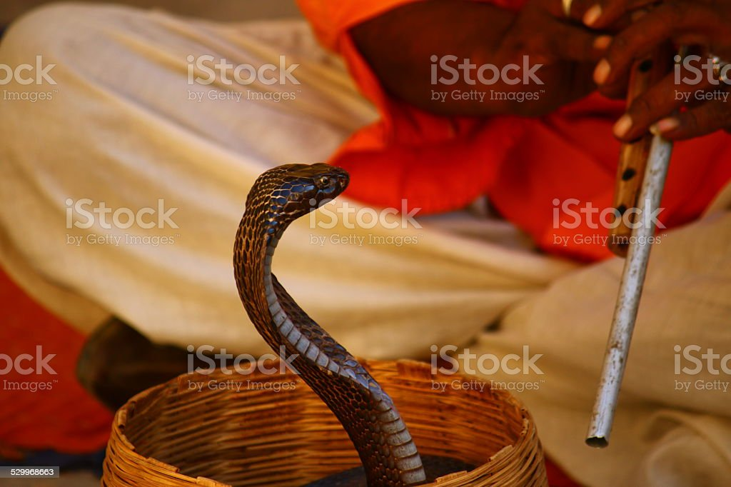 Snake Charming stock photo