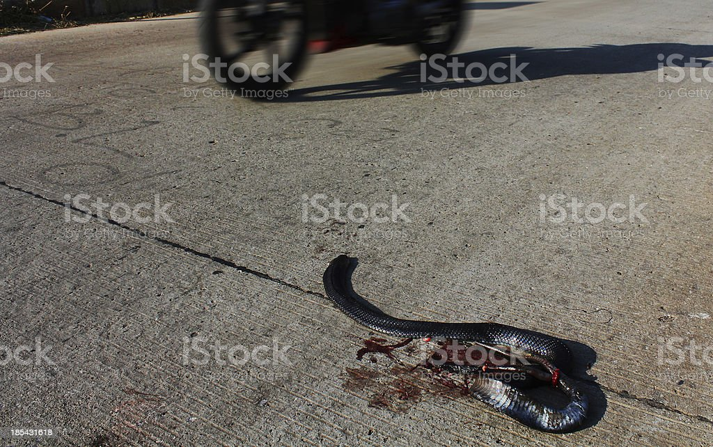 snake crushed vehicle stock photo