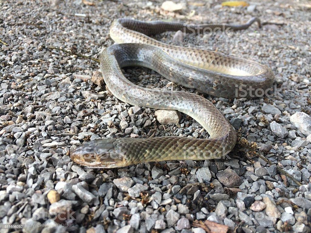 snake dies stock photo