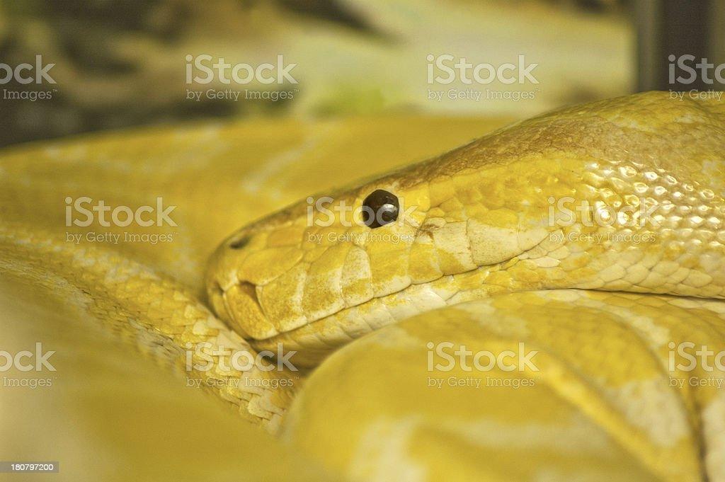 Snake head stock photo