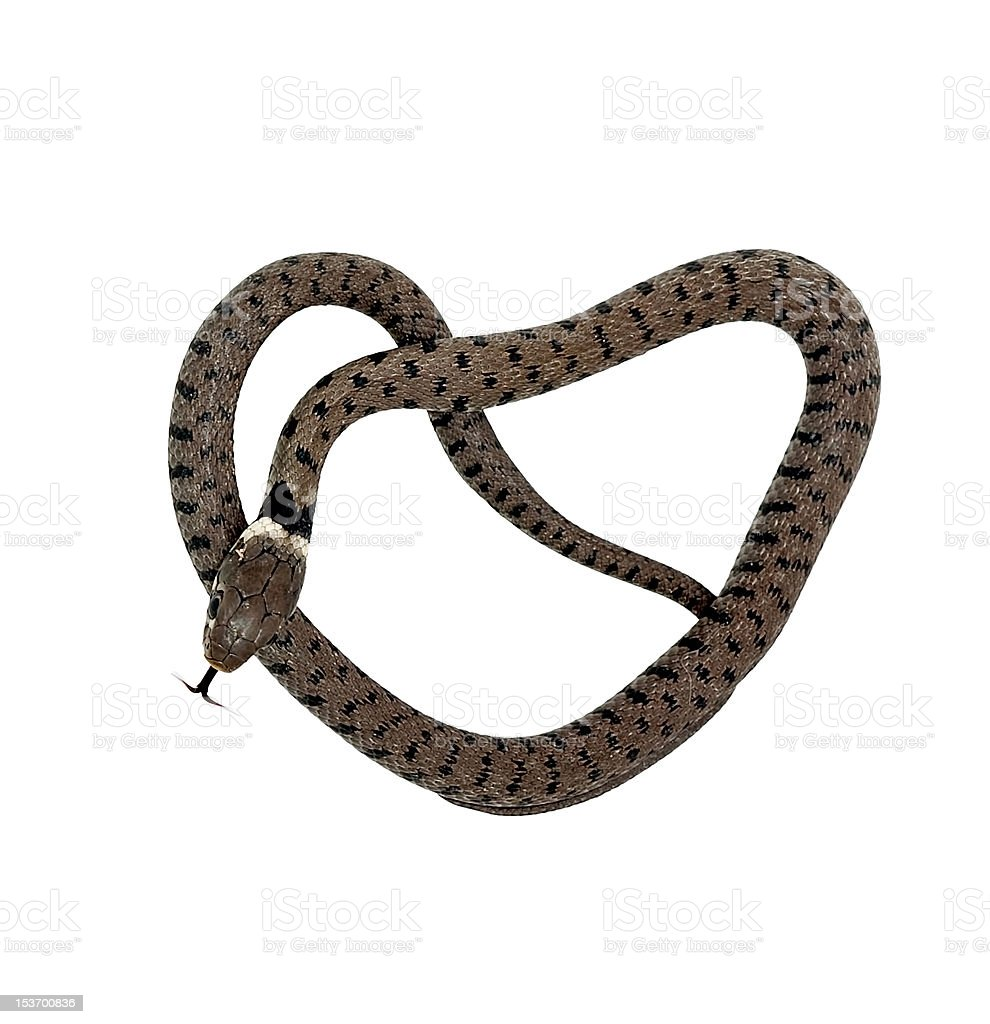 Snake - heart shape stock photo