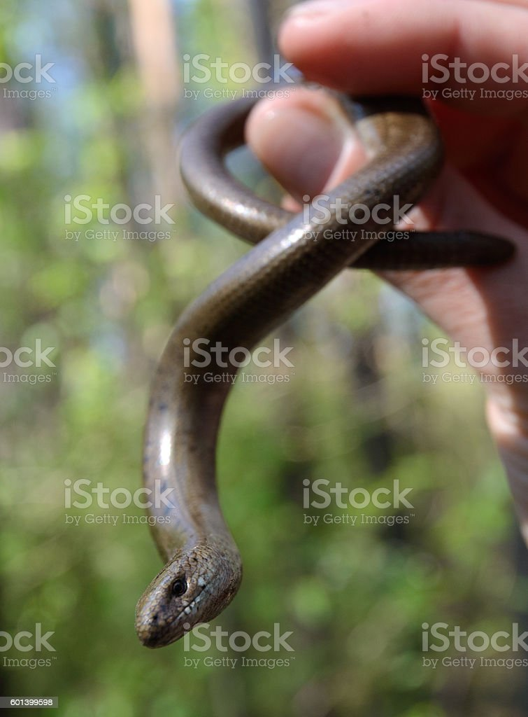 snake in one's hand stock photo