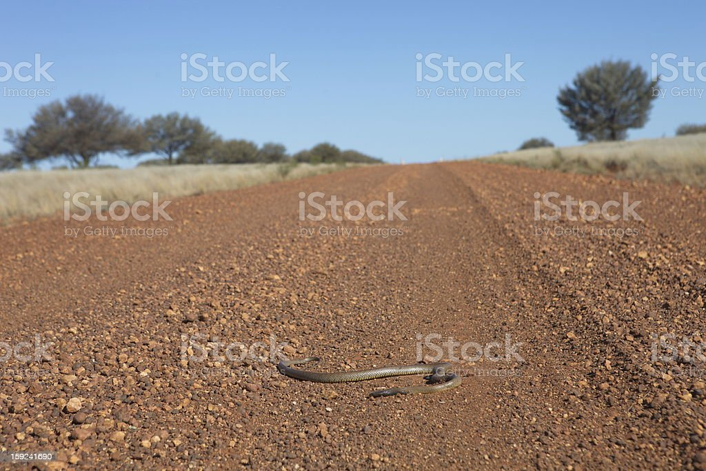 Snake in the outback stock photo