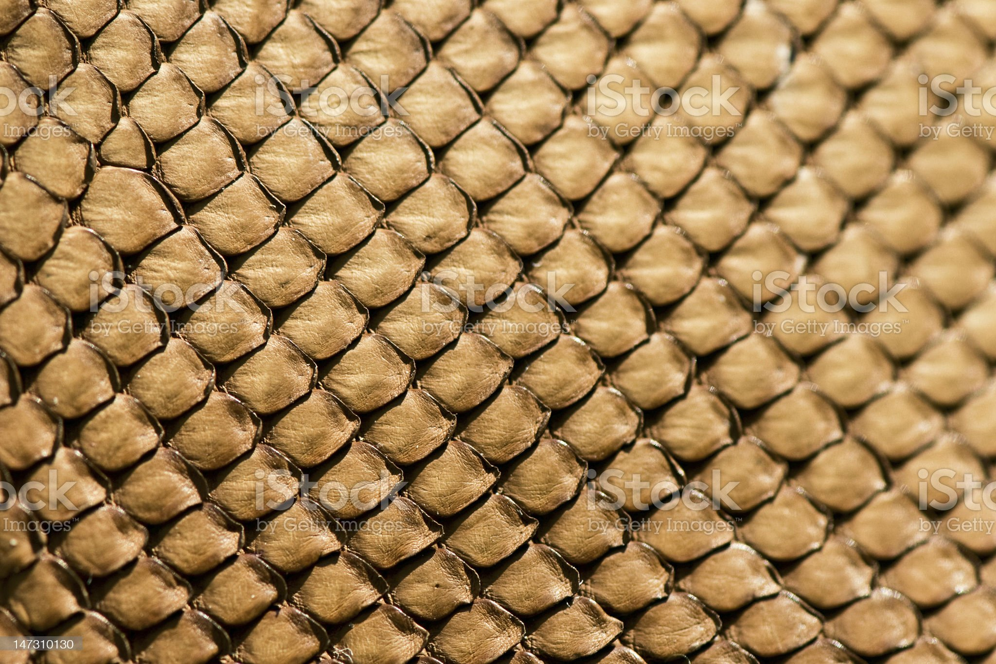 Snake leather texture royalty-free stock photo