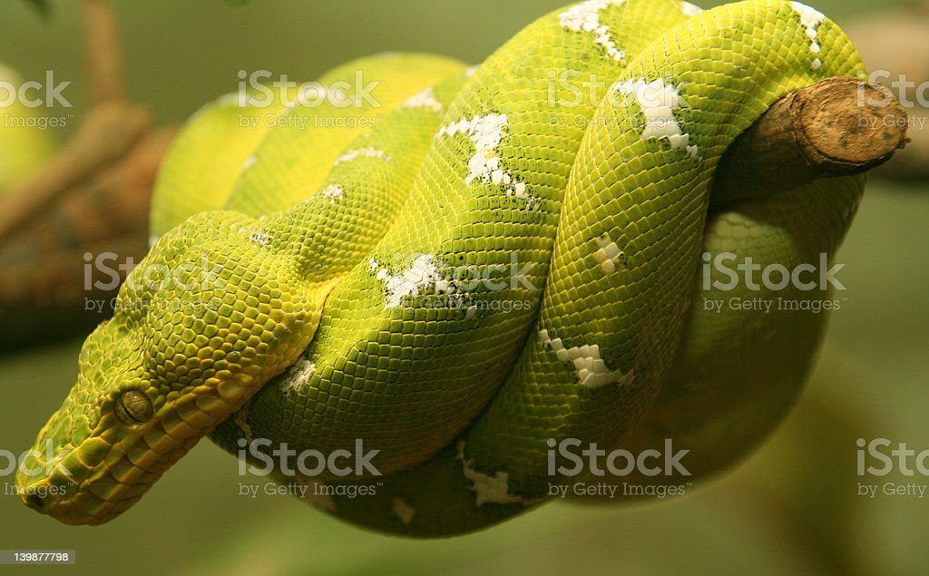 Snake on a branch stock photo