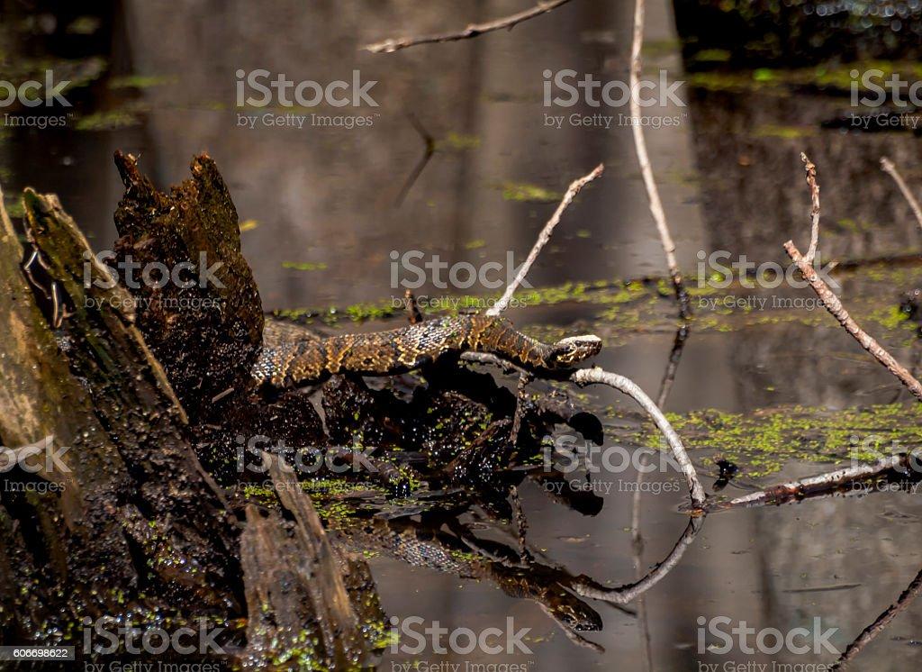 Snake on a Branch stock photo