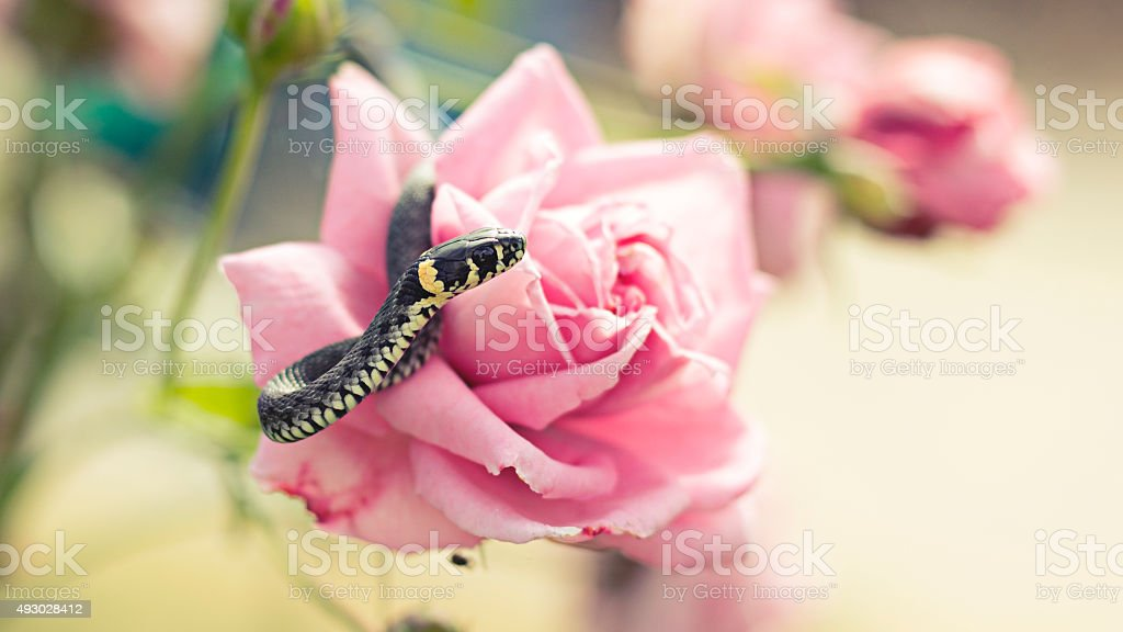 snake on a flower stock photo